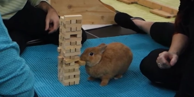 jenga-bunny